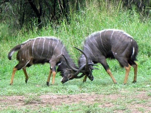in nature, males are more aggressive