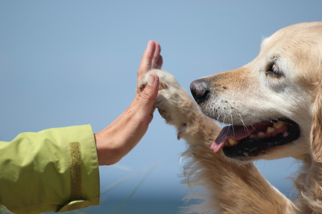woman and dog high-fiving