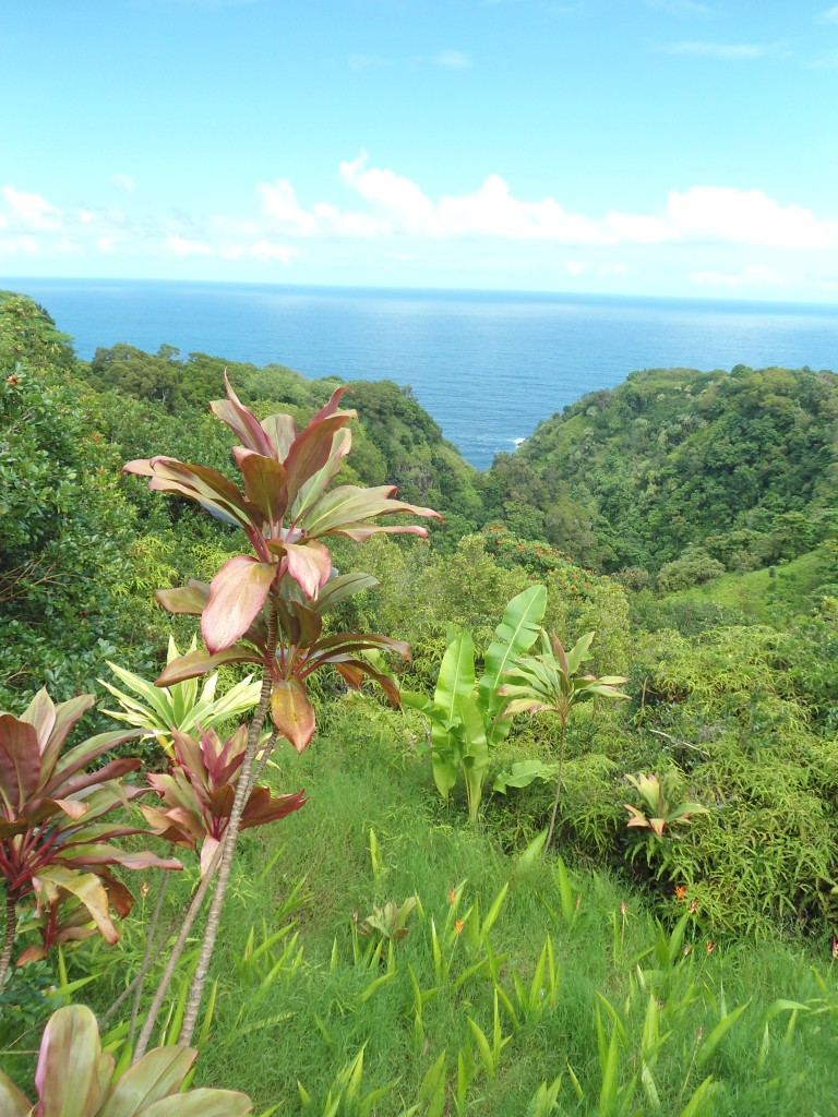 Rd to Hana trop garden 2b