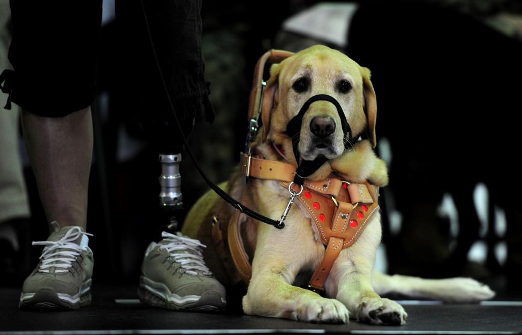 service dog with his veteran handler