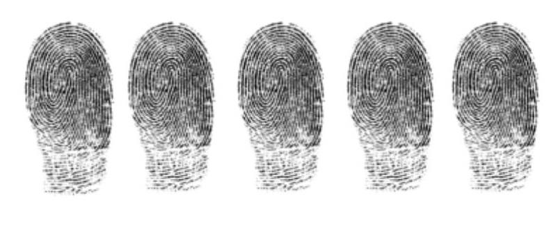 5 fingerprints