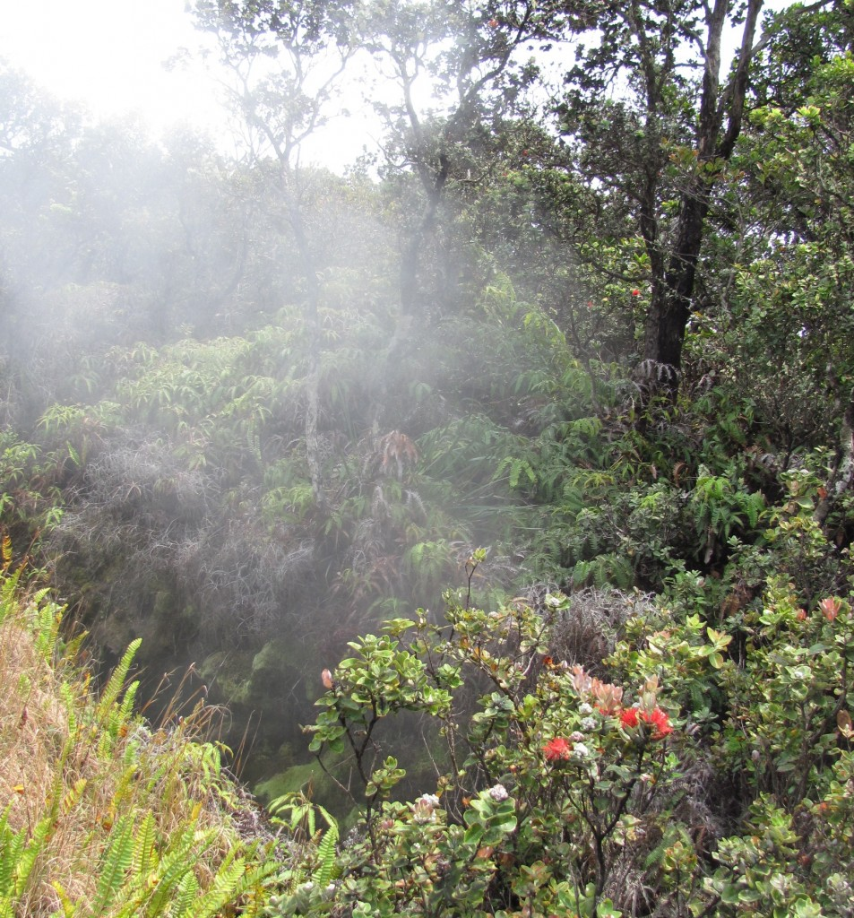 Big Island steam vent