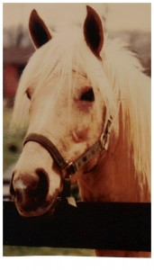picture of palomino horse
